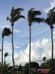 Iloilo palms
