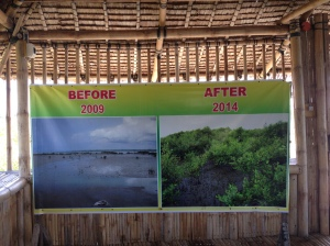 Transformation from abandoned fishpond to mangrove sanctuary